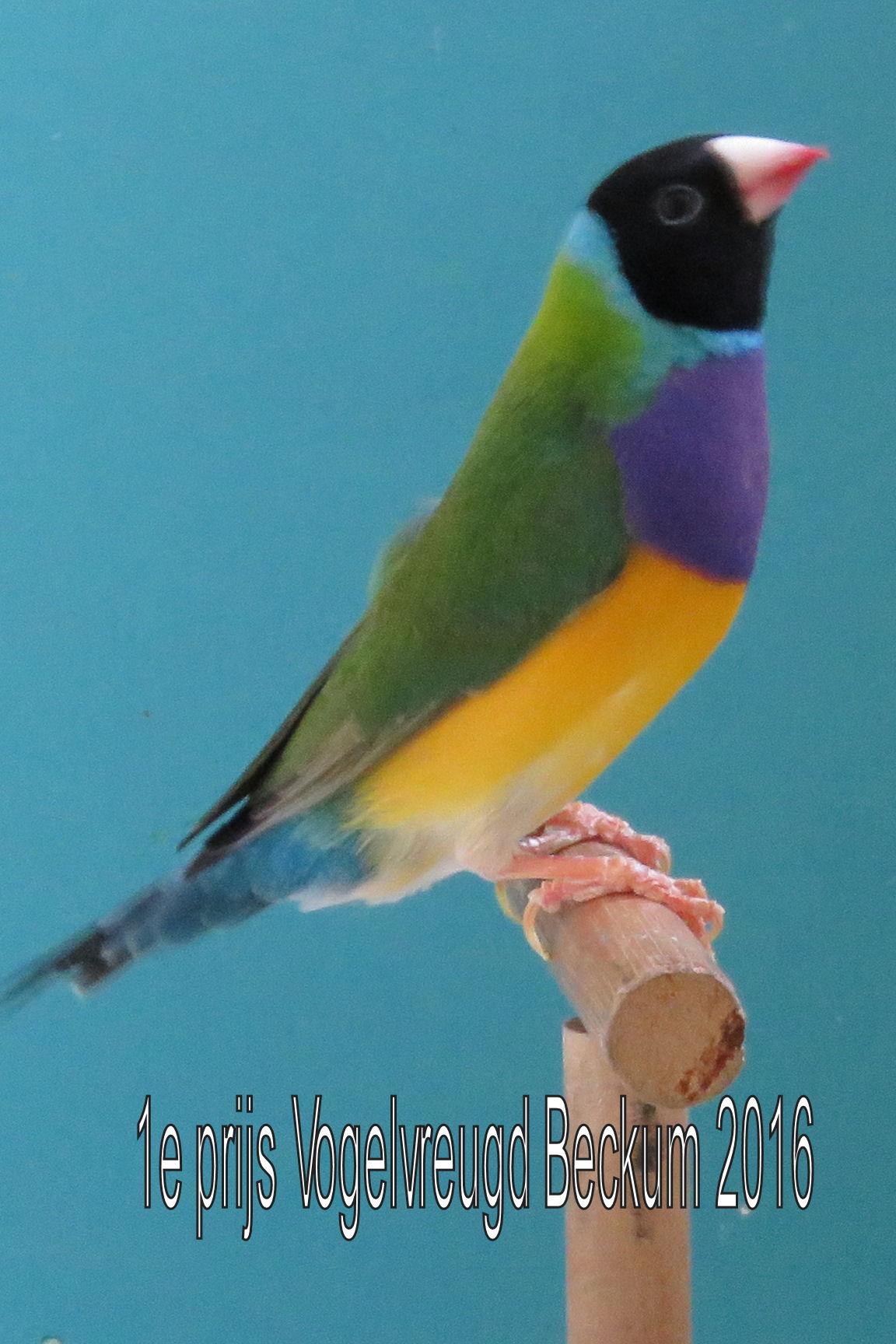 VogelvreugdBeckum2016 meerkleuren 1