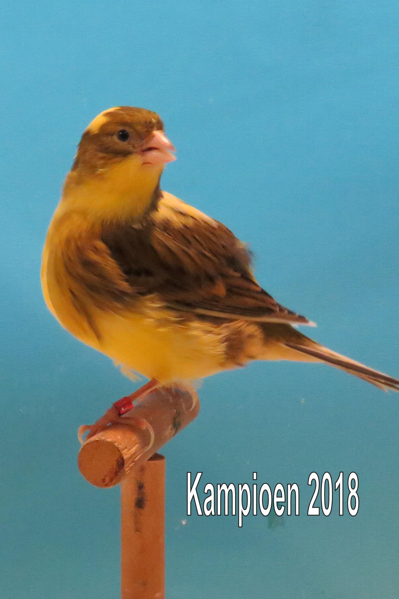 VogelvreugdBeckum2018 fife
