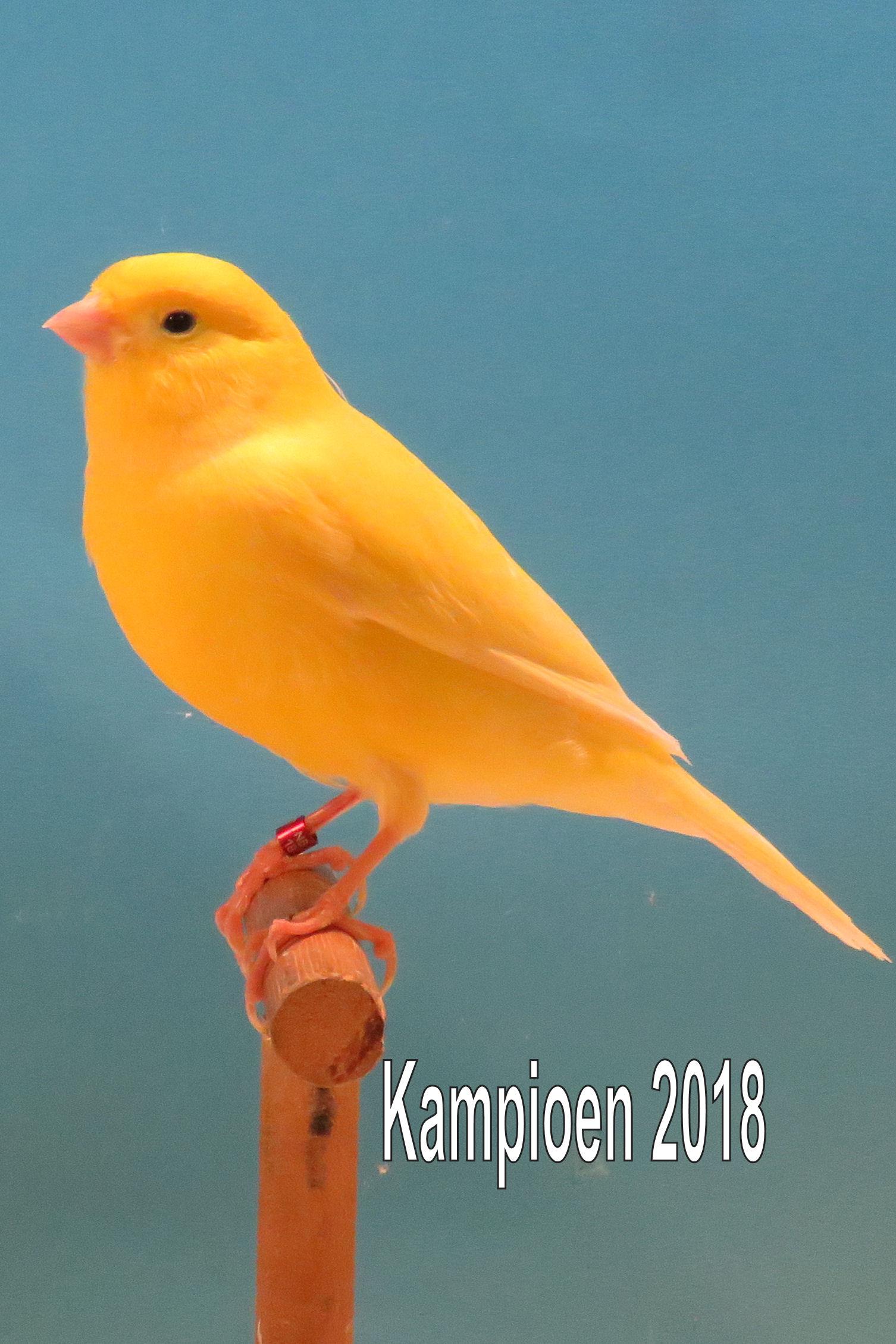 VogelvreugdBeckum2018 geel intensief