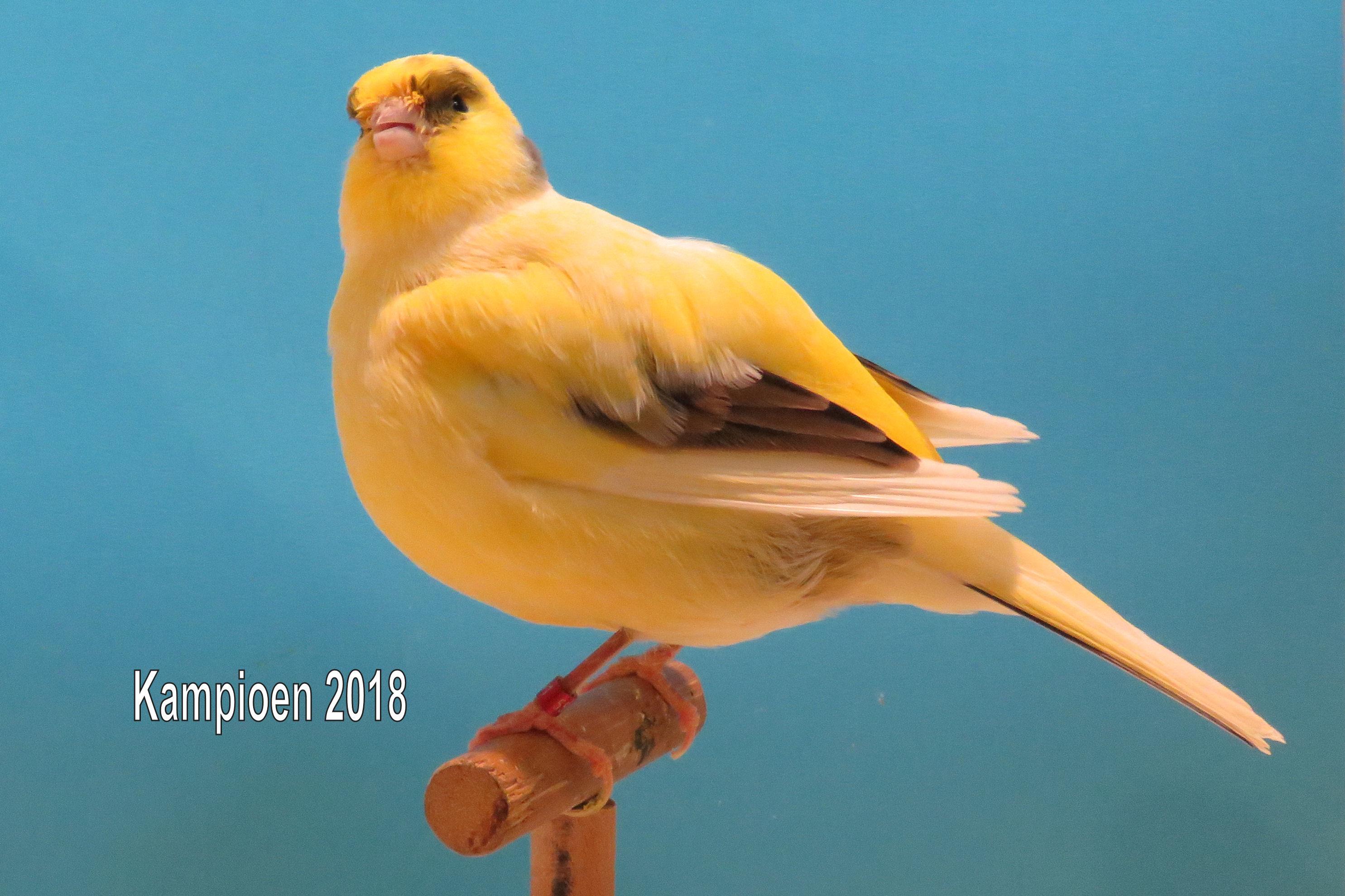 VogelvreugdKampioen2018 border