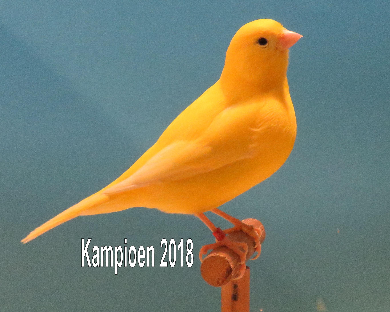 VogelvreugdKampioen2018 geel intensief